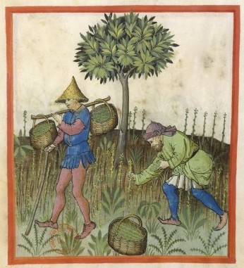 Botanical - Medieval -  Horticultural practices -  (14)