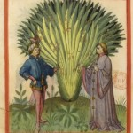Botanical - Medieval -  Horticultural practices -  (15)