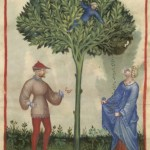 Botanical - Medieval -  Horticultural practices -  (4)