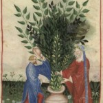 Botanical - Medieval -  Horticultural practices -  (5)