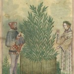 Botanical - Medieval -  Horticultural practices -  (8)