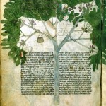 Botanical - Medieval -  Person in fig tree