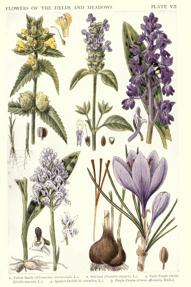 New British Herbal 1919