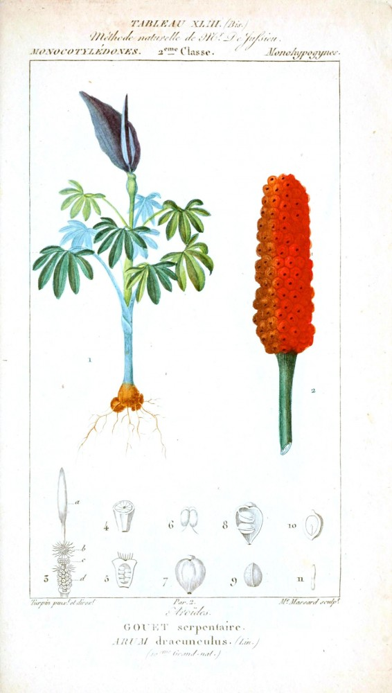 Botanical - Plant Taxonomy - French 1819 -  (11)
