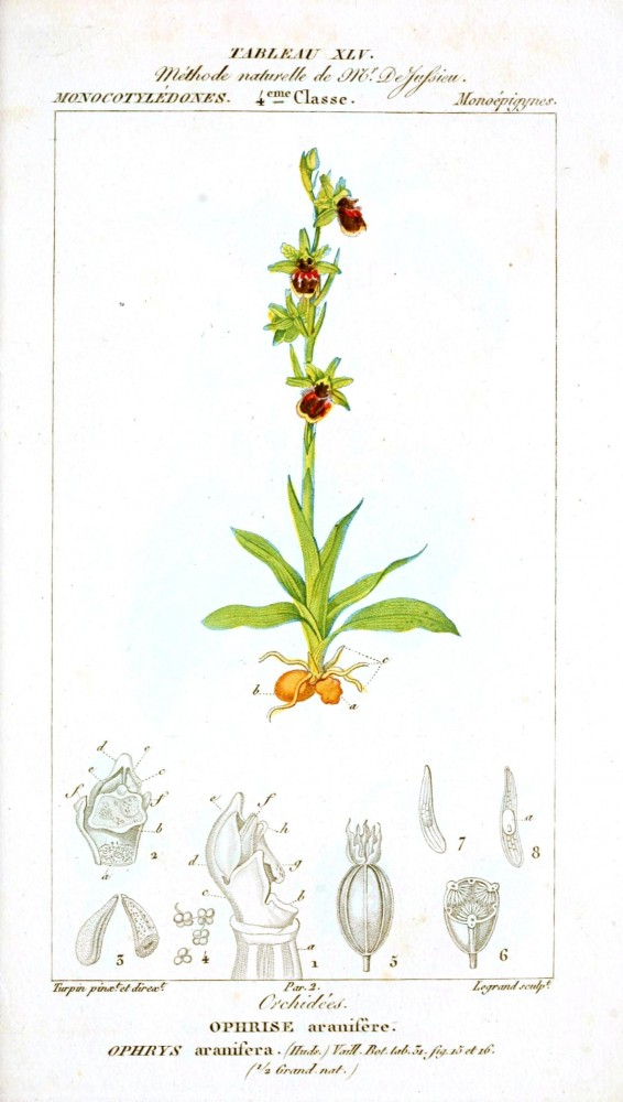 Botanical - Plant Taxonomy - French 1819 -  (14)