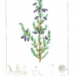 Botanical - Plant Taxonomy - French 1819 -  (20)