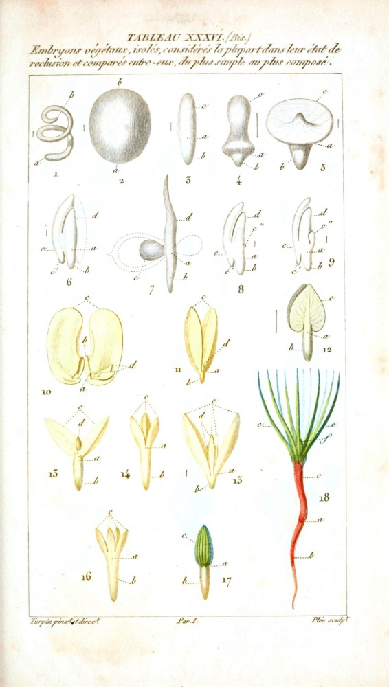 Botanical - Plant Taxonomy - French 1819 -  (3)