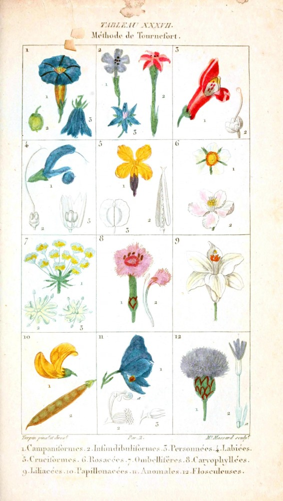 Botanical - Plant Taxonomy - French 1819 -  (4)