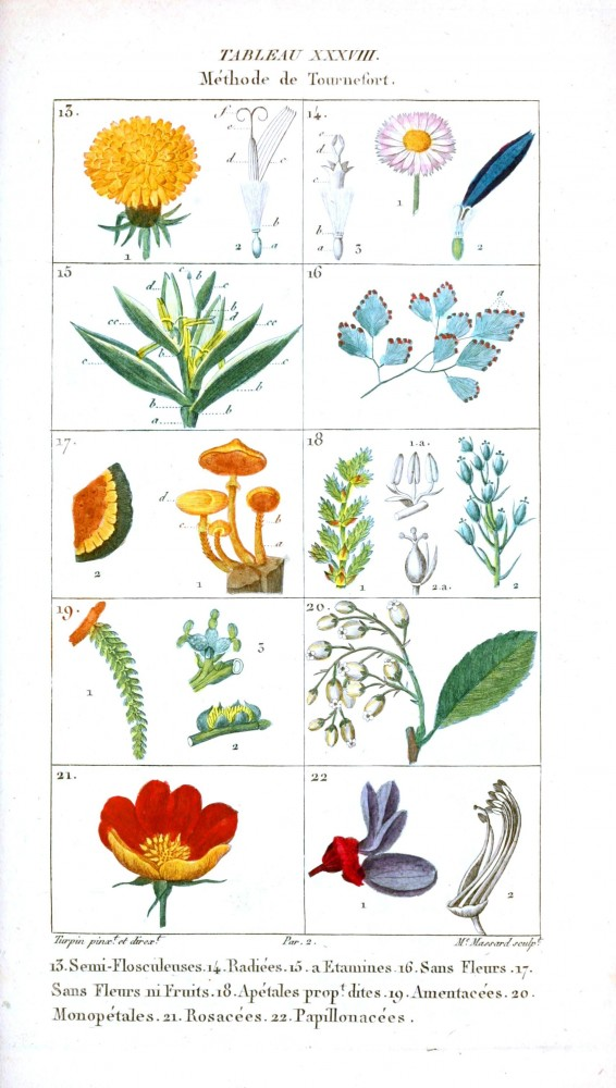 Botanical - Plant Taxonomy - French 1819 -  (5)