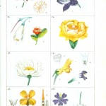 Botanical - Plant Taxonomy - French 1819 -  (7)