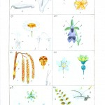 Botanical - Plant Taxonomy - French 1819 -  (8)