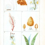 Botanical - Plant Taxonomy - French 1819 -  (9)