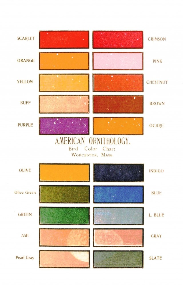 Color - Multi - Bird color chart