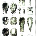 Design - Apparel - Hair - Wigs - 18th Century
