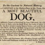 Ephemera - Handbill - A most beautiful dog