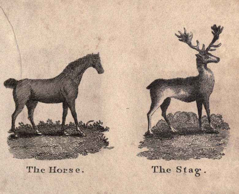 Juvenile - Educational plate - Infants Cabinet of Birds and Beasts (1820) 10 Horse, Stag