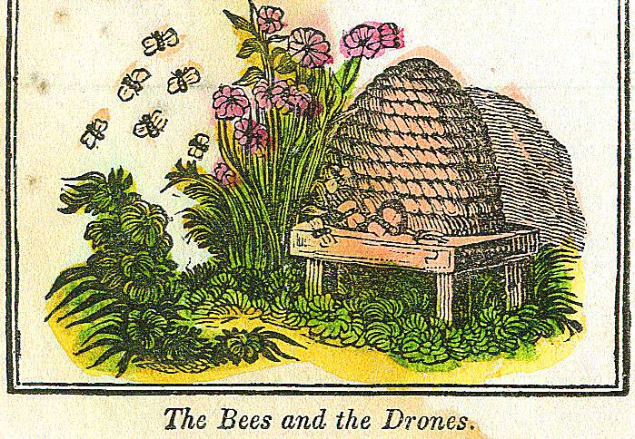Juvenile - Illustration - Beehive