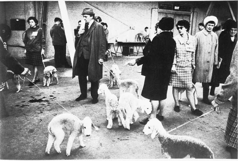 Portrait - People with Animals - Crufts Dog Show 1968