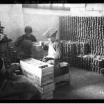 Portrait - Photo - Children packing sardines - France