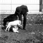 Portrait - Photo - Man playing with dogs