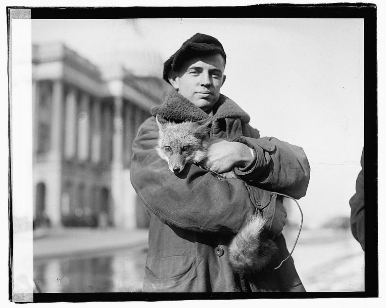 Portrait - Photo - Man with a fox