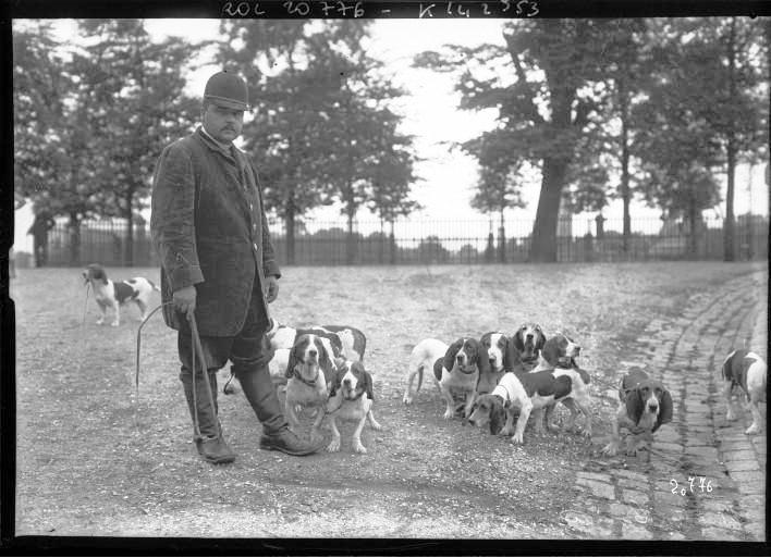Portrait  - Photo - Man with basset hounds - French - Photo