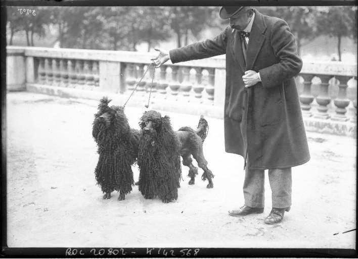 Portrait  - Photo - Man with two Long hair French poodles - French - Photo