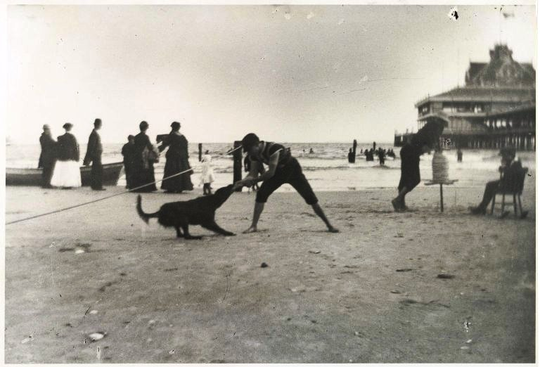 Portrait  - Photo - People with animals - Boy and dog, Coney Island (Brooklyn Museum)