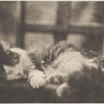 Portrait - Photo - Sleep - Cat