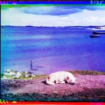 Portrait - Photo - Sleep - White dog