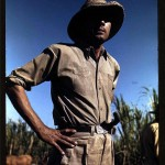 Portrait - Photo - Sugar cane worker