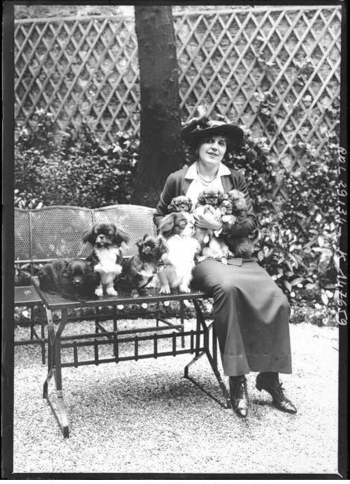 Portrait - Photo - Woman with puppies - French - photo