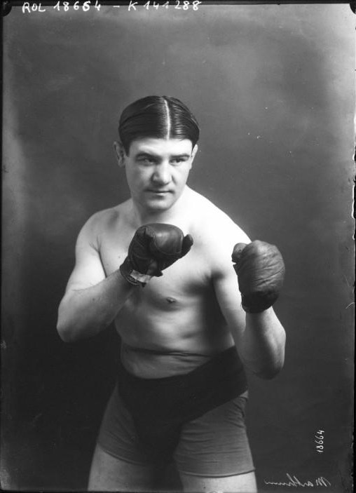 Portrait  - Photo - boxer photo